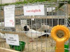 9_Sddt._Mohrenkopf_schwarz_Medium.JPG
